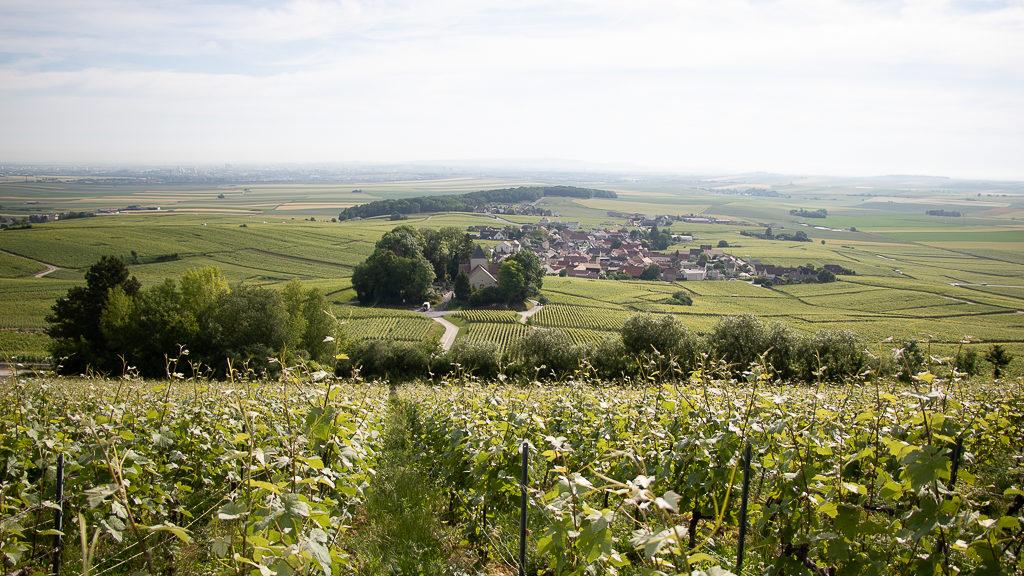 vigneron champagne leclere pointillart ecueil